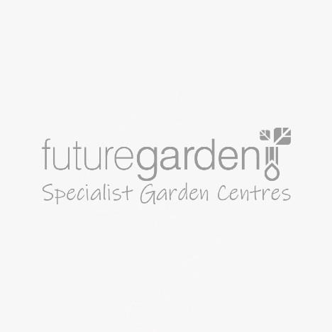 Kent & Stowe Leather Gardening Gloves - Flutter Bugs Teal