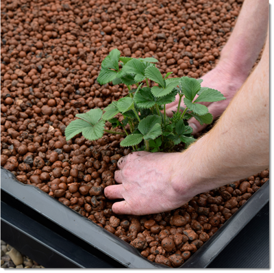Planting_In_Pebbles