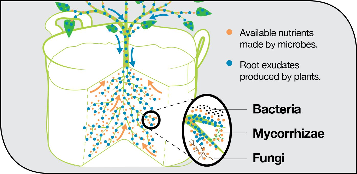 root exudate and beneficial organism diagram